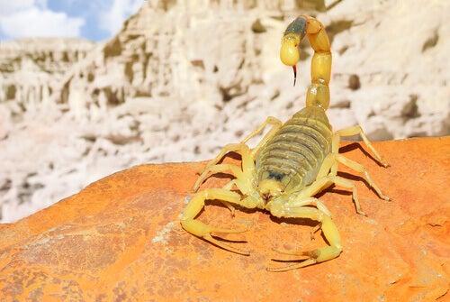 A yellow scorpion.