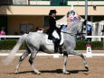 A trained horse and its rider at a show.