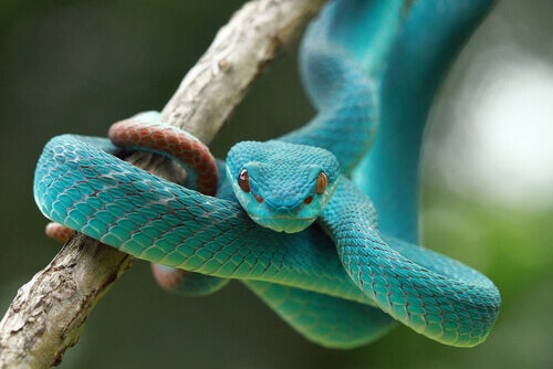 The Curious Senses of Snakes