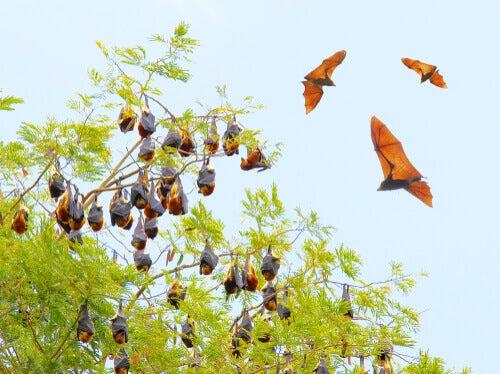5 Bat Species