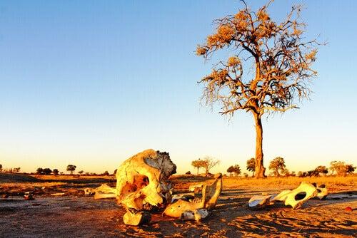 Elephant bones at sunrise.