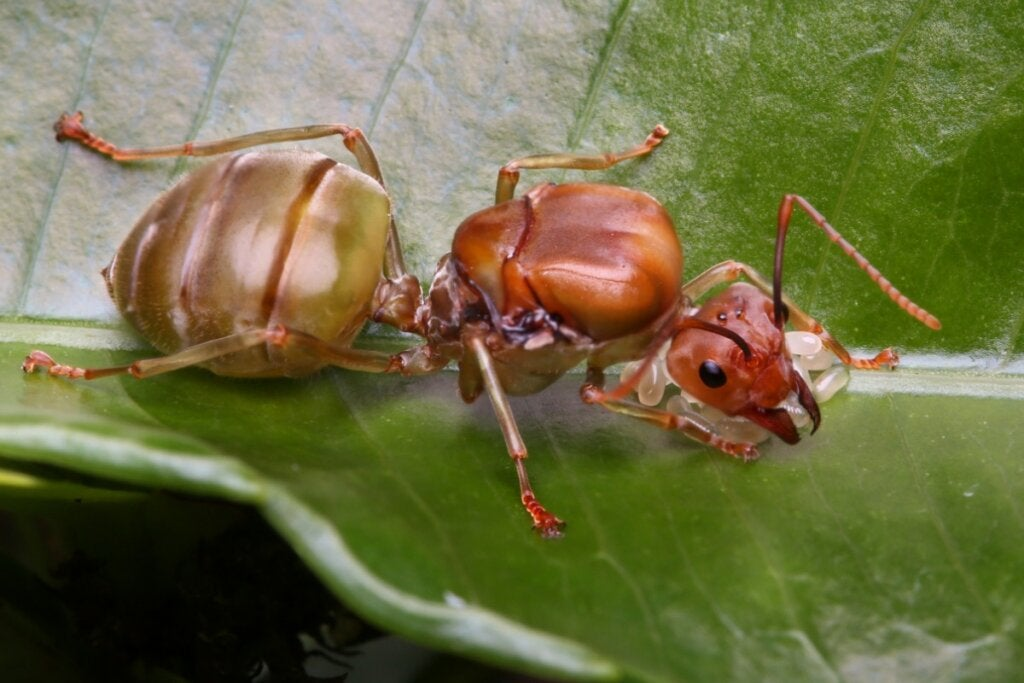 10 Types of Insects and Their Characteristics
