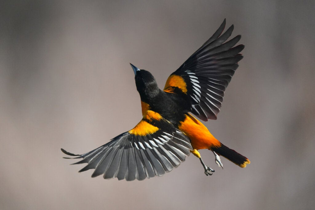 Find Out How Birds Fly!