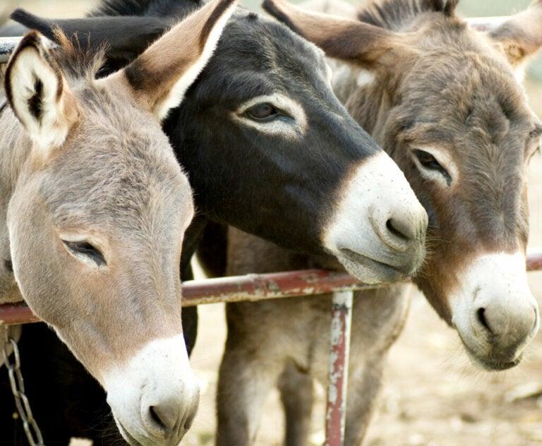 Burrolandia: A Refuge for Abused Donkeys