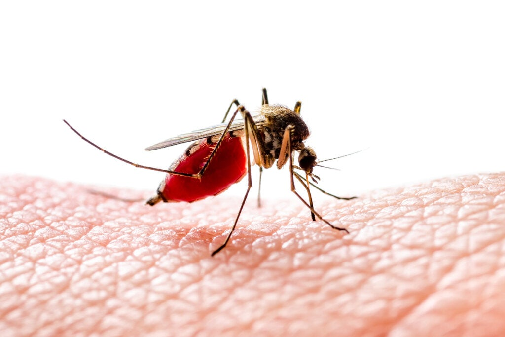 Why Do Mosquitoes Bite Some People and not Others?