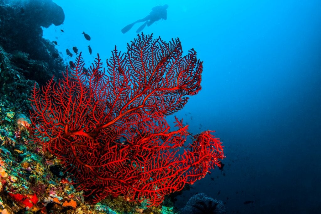 4 Types of Coral