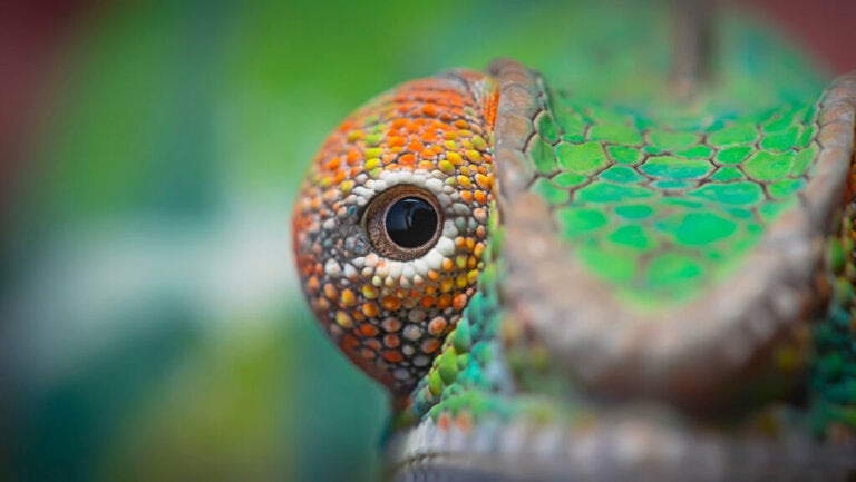 5 Animals with Big Eyes