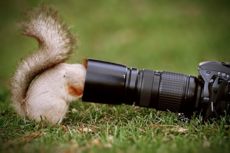The 5 Best Animal Documentaries