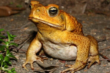 4 Species of Poisonous Toads