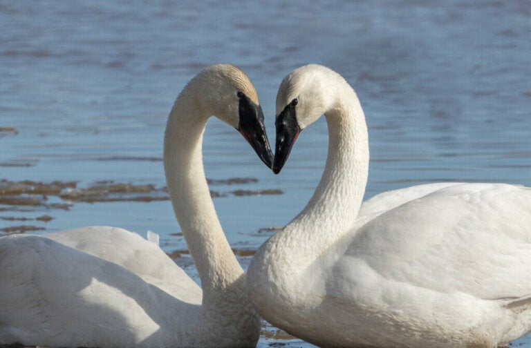 7 Strange Types of Mating
