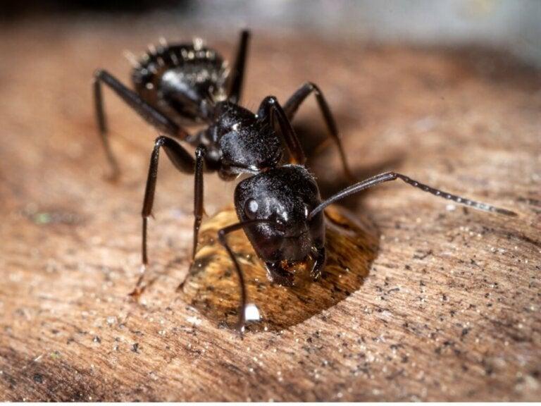 The Behavior of Ants