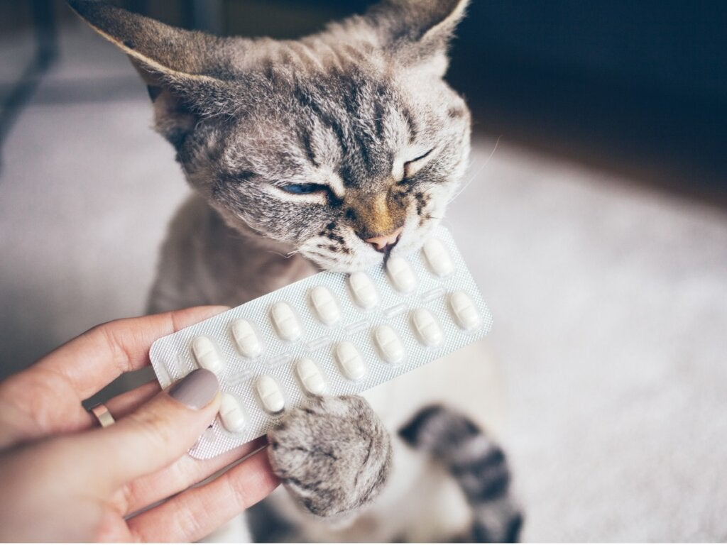 Antihistamines for Cats: Dosage and Side Effects