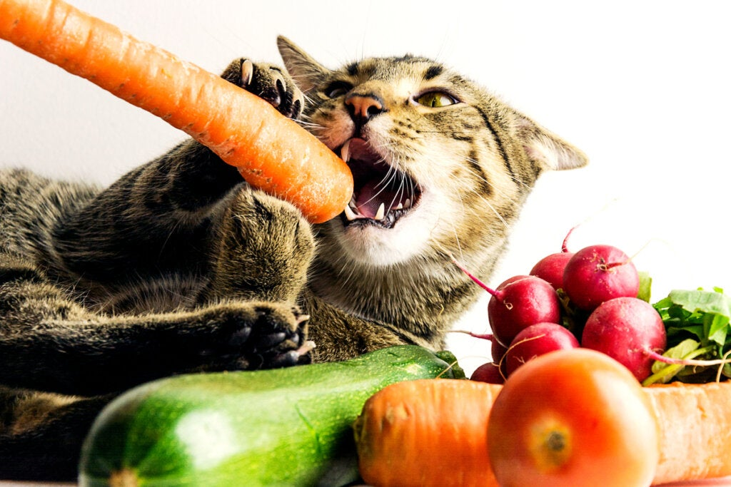 Vegan Diets for Pets are Incomplete, Experts Say