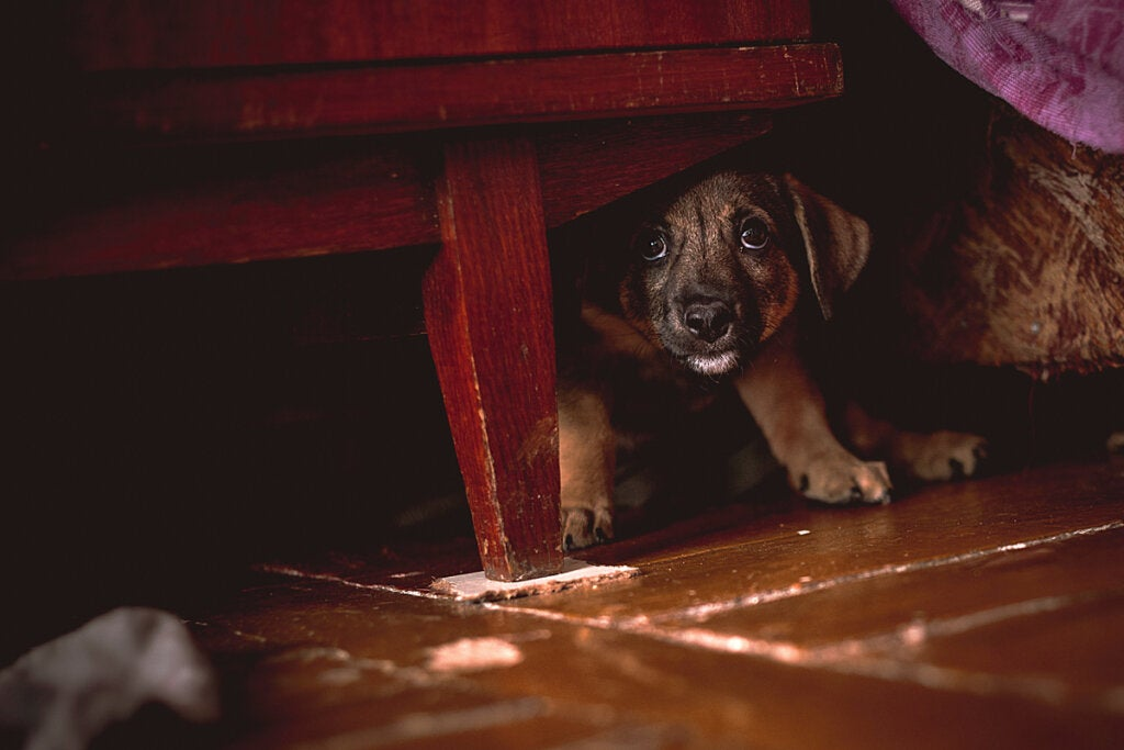 What to Do if My Dog is Afraid of Me?