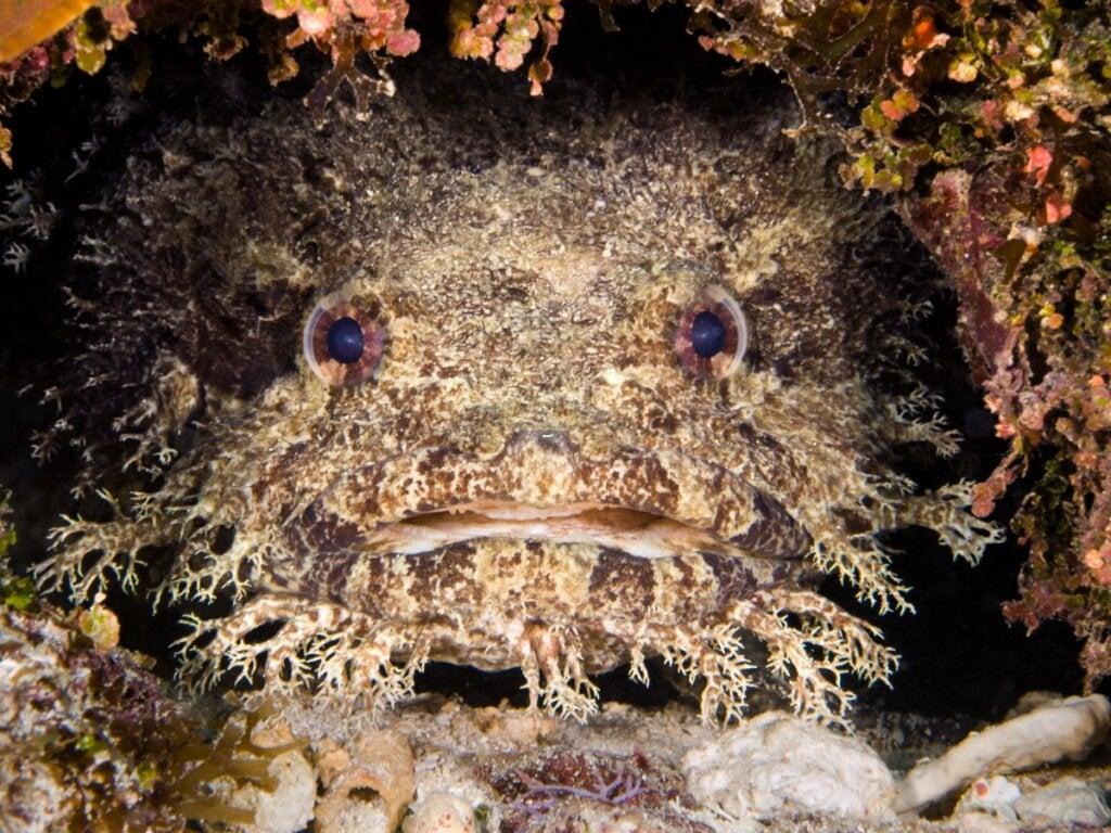 Toadfish: Habitat and Characteristics