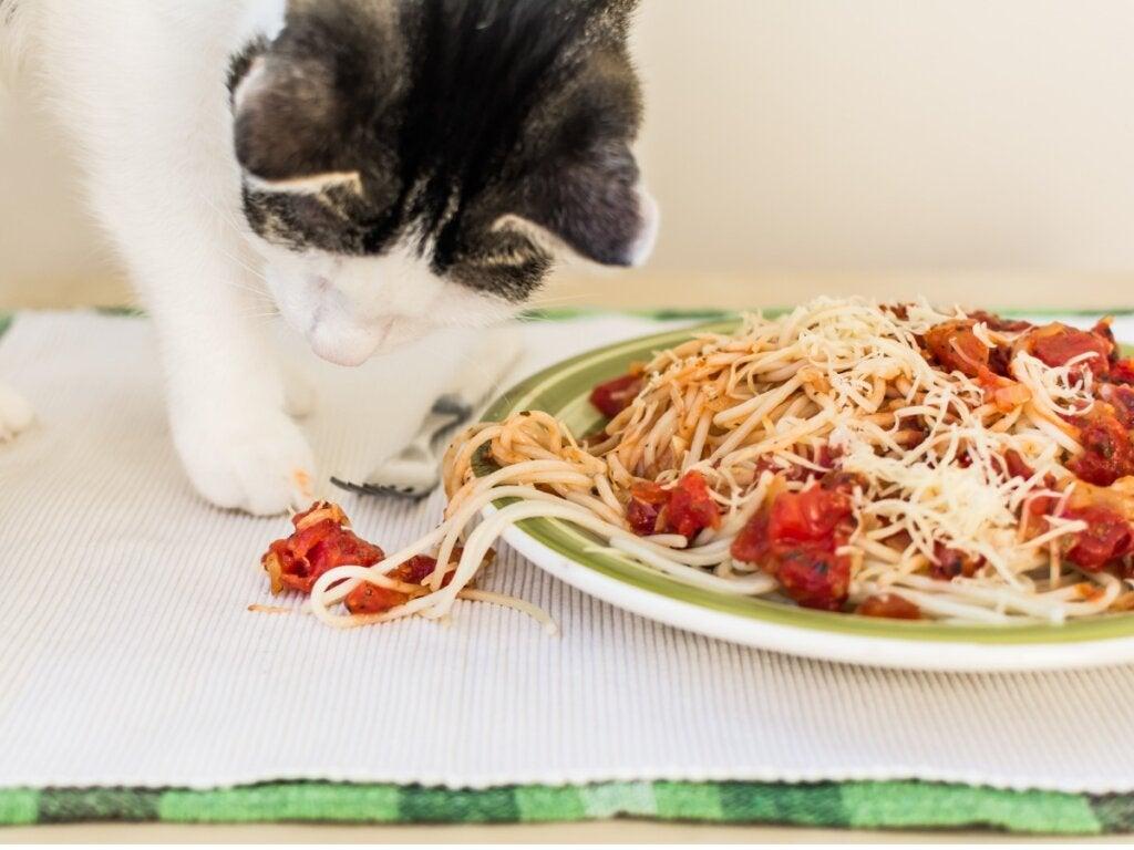 Should Cats Eat Pasta?