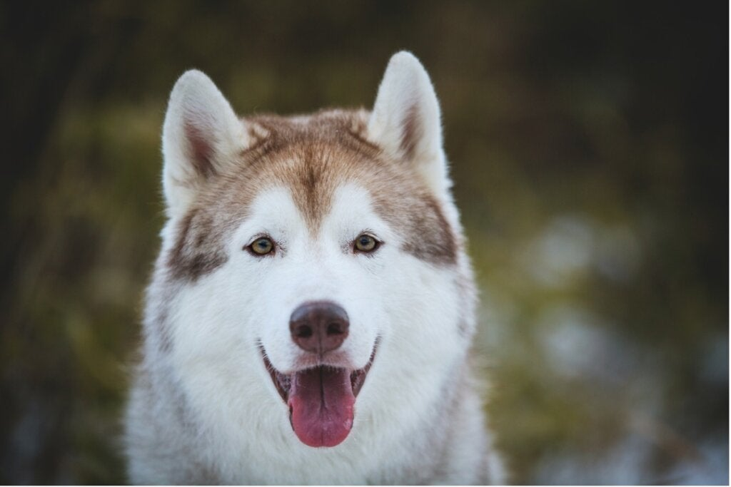 Positive Training in Dogs: What You Should Know