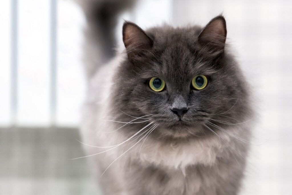 How to Identify Pain in Cats