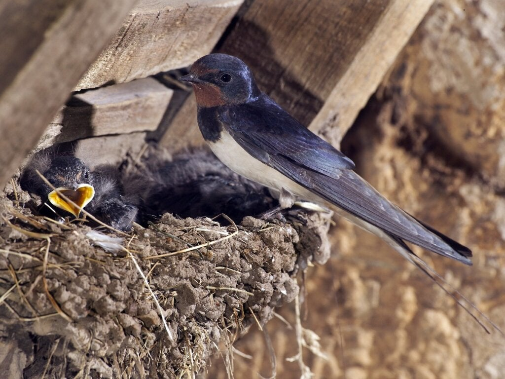 How to Feed a Swallow