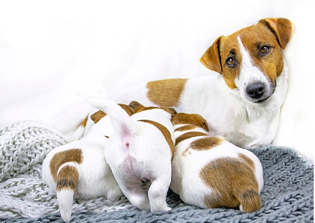 5 Keys to Weaning Puppies