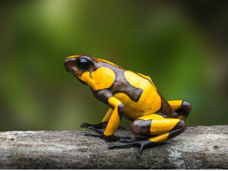 How Do Amphibians Breathe?