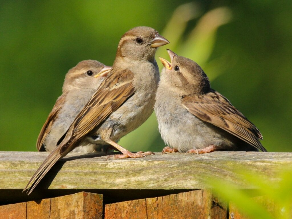 How to Feed Sparrows from Home