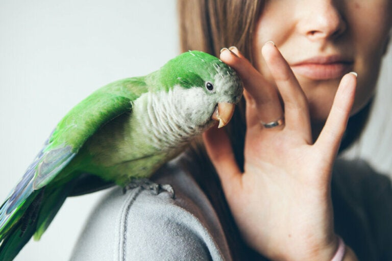 10 Aspects of Monk Parakeet Care
