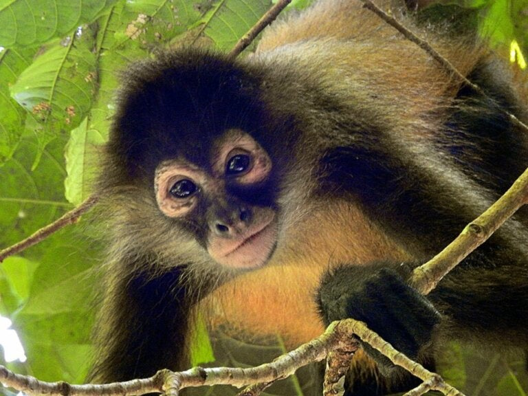 The 25 Most Endangered Primates