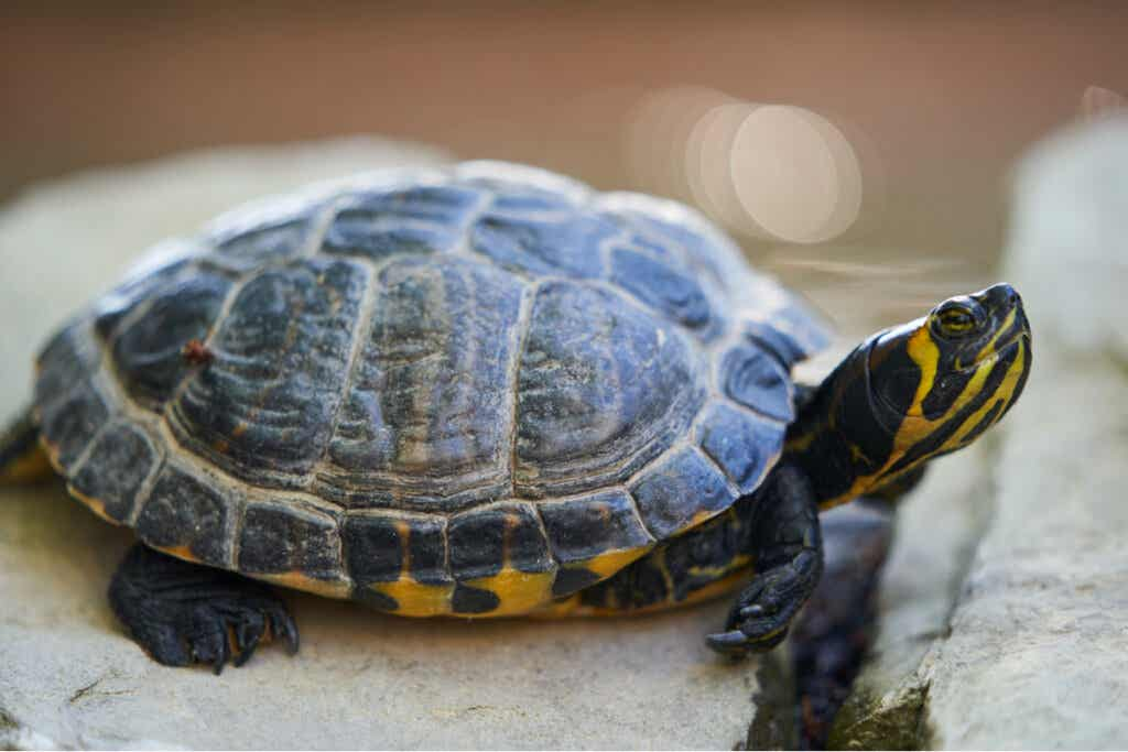 100 Names for Turtles and Tortoises!