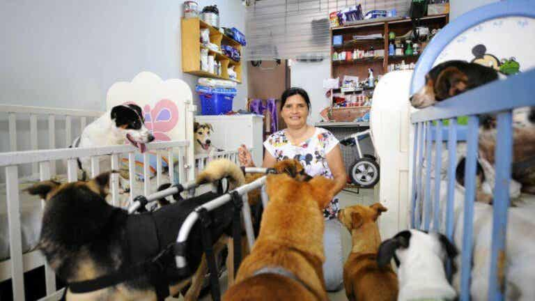 Disabled Dogs: Woman Uses Cribs, Wheelchairs and Diapers