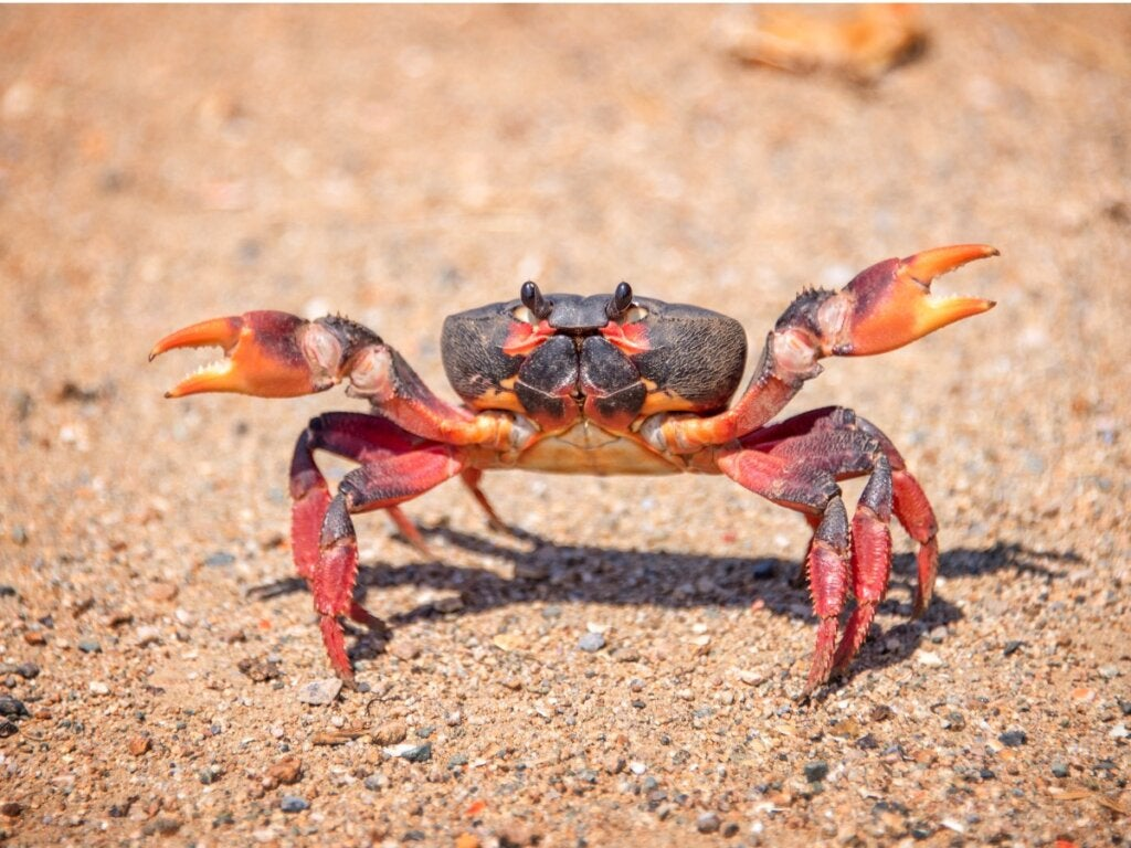 10 Curiosities About Crabs
