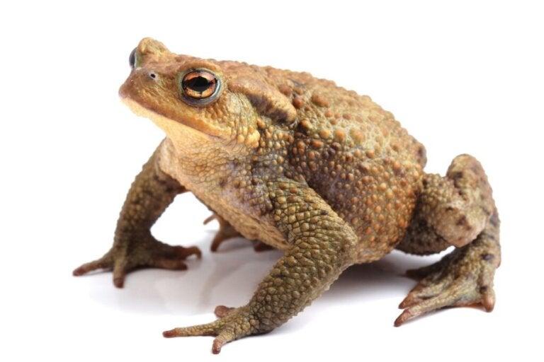 10 Curiosities About Toads