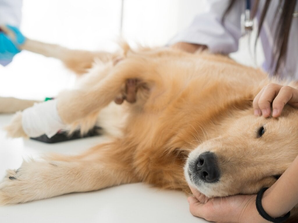 Caring for a Sterilized Dog