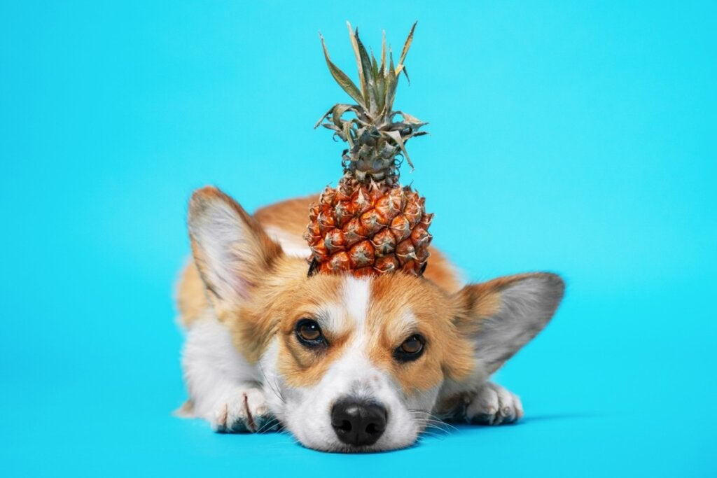Is Pineapple Good for Dogs?