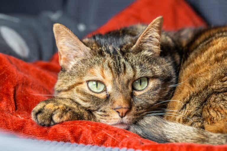 Cats Can also Suffer from Separation Anxiety