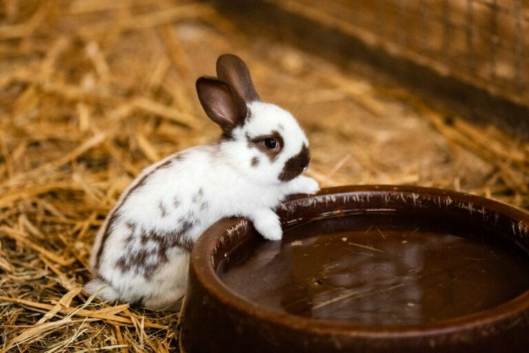 Do Rabbits Drink Water?