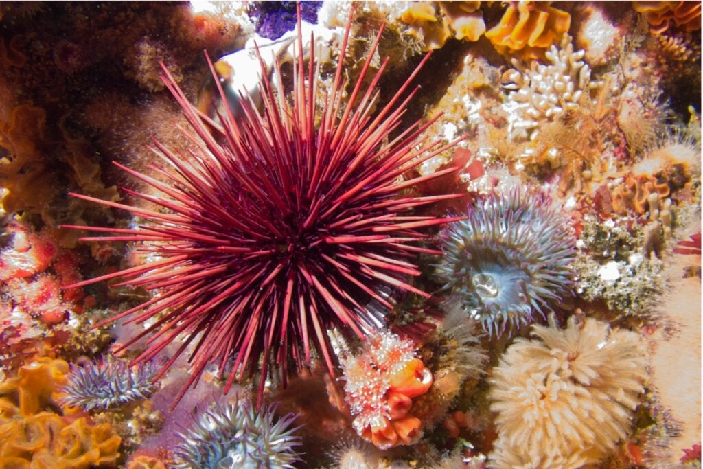 What Do Sea Urchins Eat?
