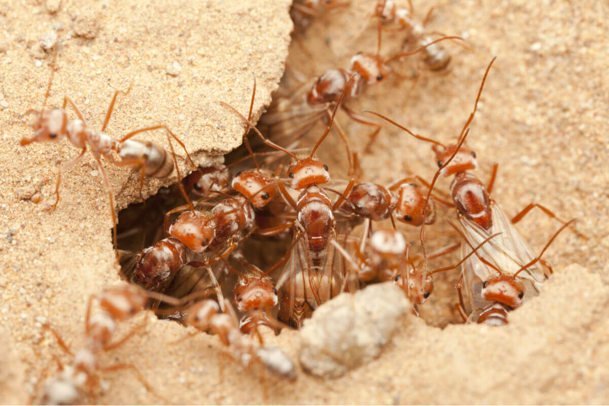 A colony of ants in the sand.