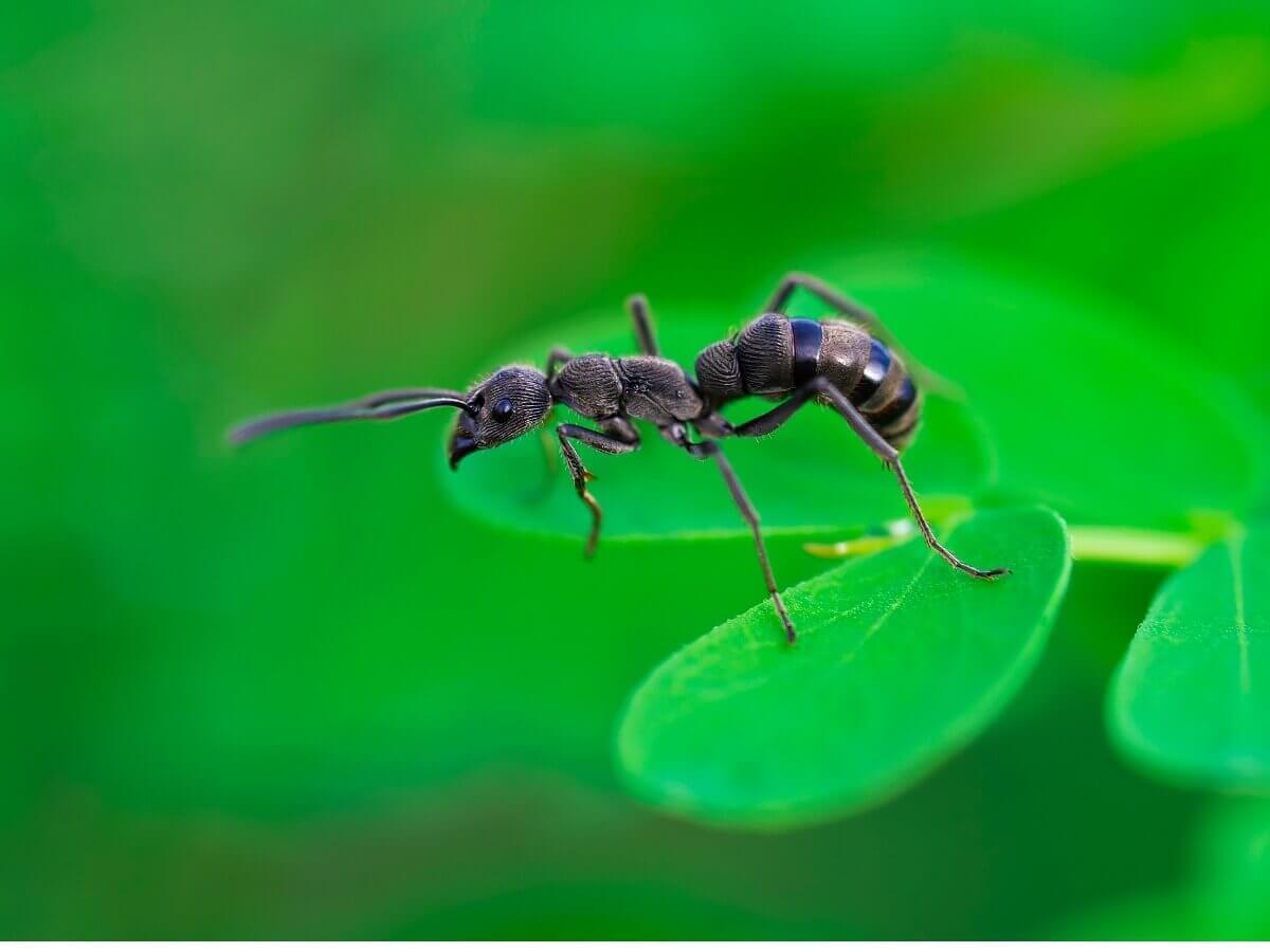 An ant on a leaf.