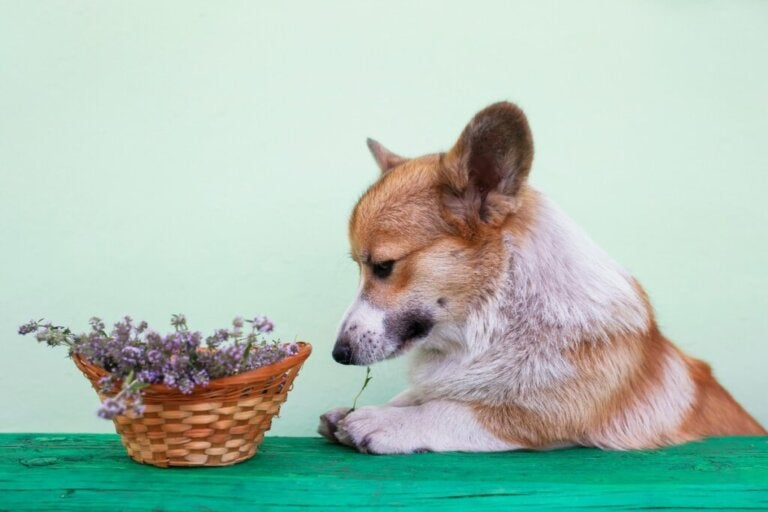 Is Rosemary Good for Dogs?