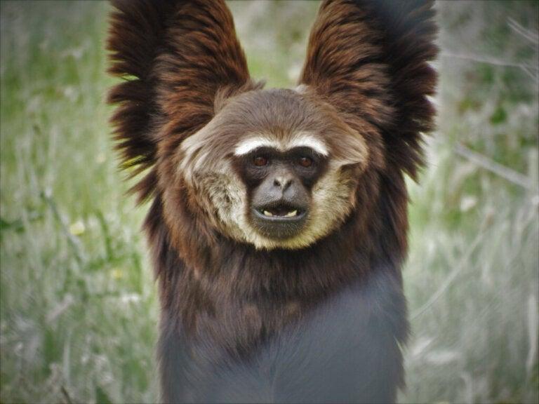 10 Curiosities About Primates