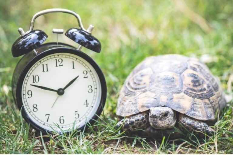 How Long Does a Pet Turtle Live?